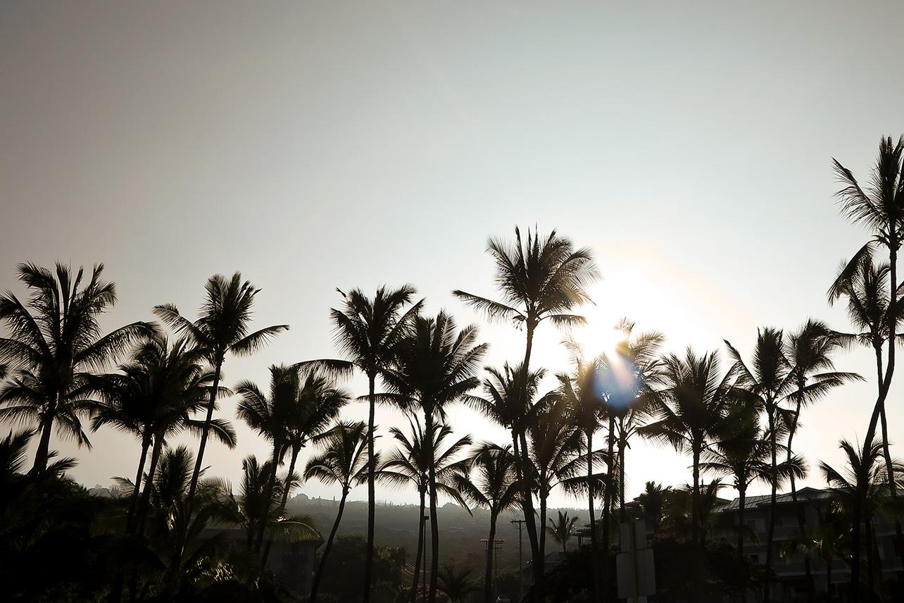 Palm trees in the morning light in Kailua-Kona