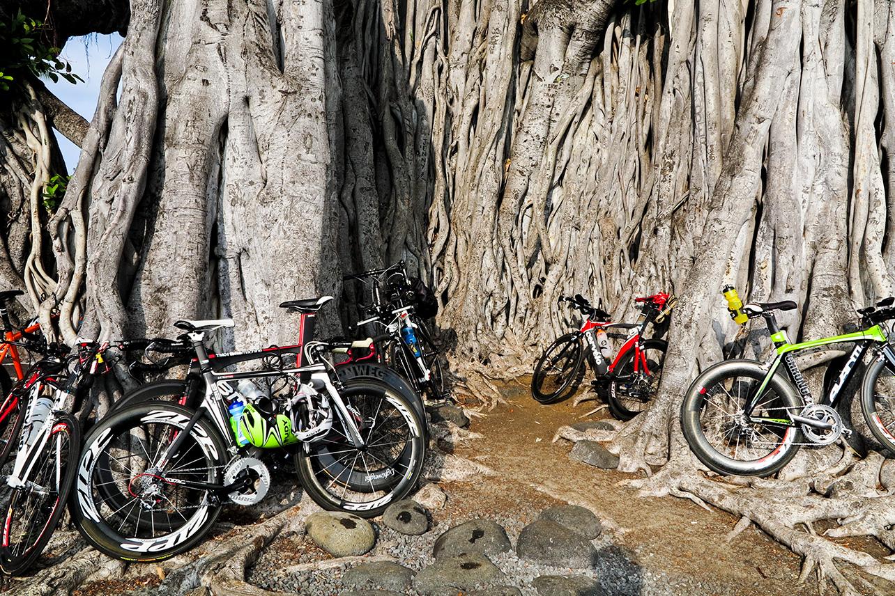 Banyan tree with bicycles, Kailua-Kona, Ironman Hawaii, 2012